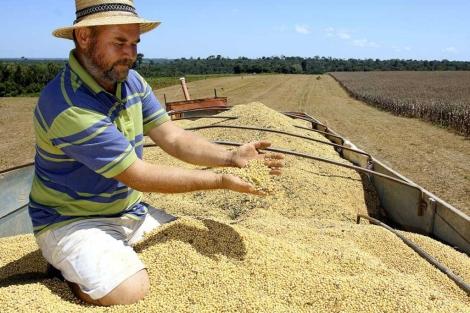 Un agricultor muestra las semillas de soja recogidas en la selva amazónica.