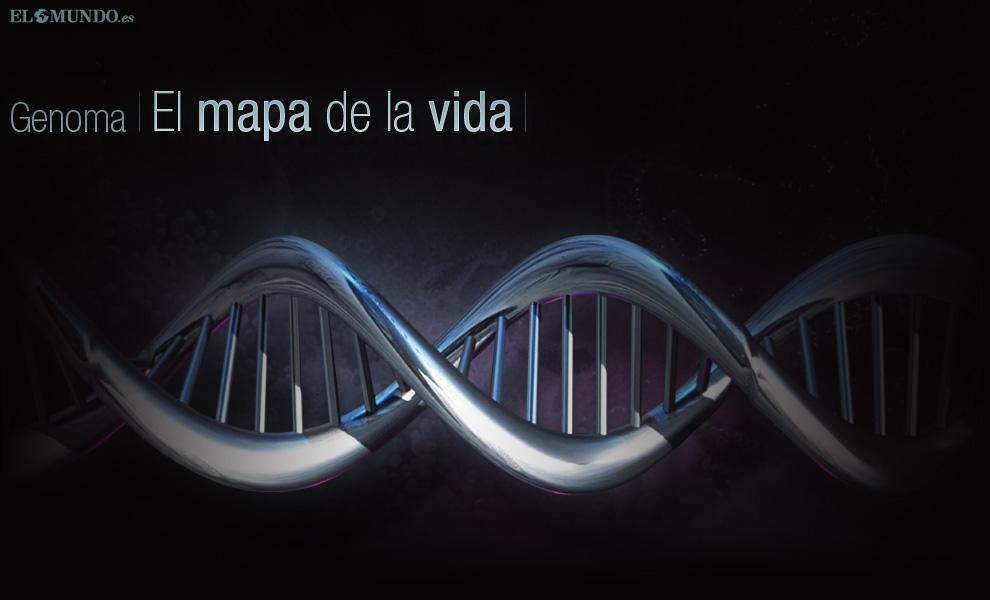 Genoma, el mapa de la vida   Especiales   ELMUNDO.es