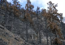 Imagen capturada en septiembre de 2007 en el pinar de Montaña Lina, que muestra el impacto del gran incendio de aquel verano. | Pascual Calabuig