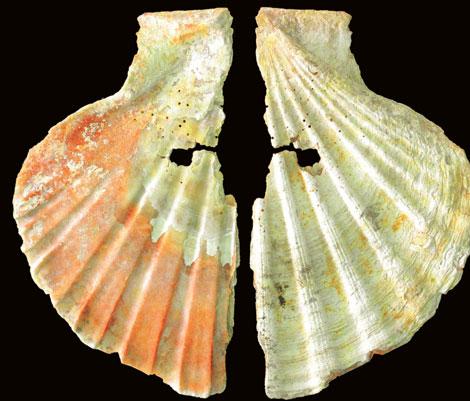 Una de las conchas perforadas utilizada por los neandertales en Murcia. |PNAS
