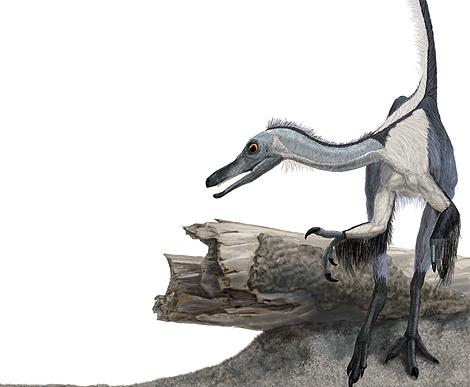 Reconstrucción de 'Haplocheirus sollers'. | Portia Sloan