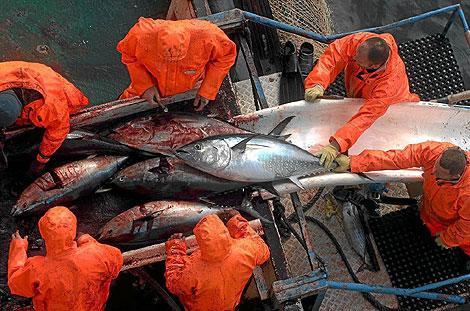 Pescadores de atún rojo en el Mar Adriático. | Afp