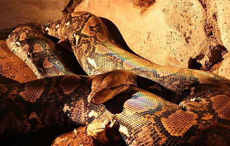 Hasta ahora, 'Titulcia' vivía en un centro de rescate de animales. | Foto: Faunia