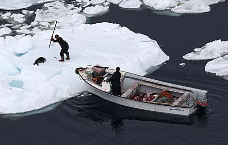 100.000 focas más que el año pasado 1270806847_0