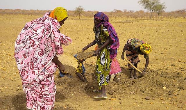 Un grupo de mujeres, las llamadas 'termitières' chadianas, busca grano en en un hormiguero. | L. B. B.