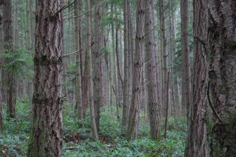 Bosque de la Isla de San Juan. | El Mundo