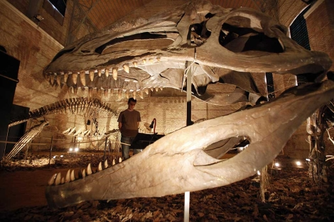 Un joven contempla, en Córdoba, el enorme esqueleto de un dinosaurio. | Madero Cubero
