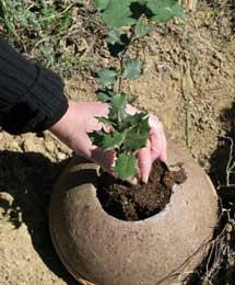 Urna de cenizas de tierra.| LIMBO