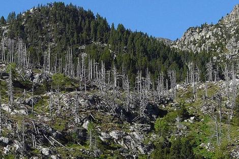 Bosque parcialmente defoliado. | Ángela Ribas