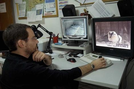 Un técnico del centro de Cazorla observa imñagenes de un quebrantahuesos. | Efe