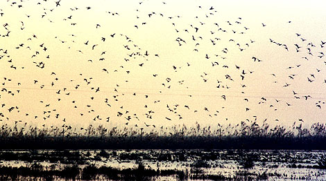 Aves an la finca Veta la Palma. | Marcelo del Pozo