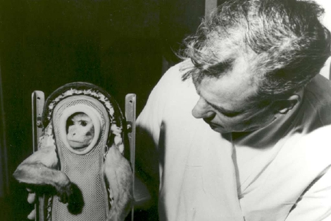 El mono Sam se prepara para su misión espacial en 1961. | NASA