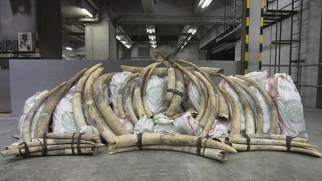 Un cargamento de marfil en Hong Kong. | Afp