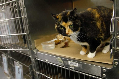 La gata Willow en Nueva York, esperando a ser trasladada hasta Colorado. | Ap