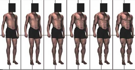 Esquema usado para que se evaluara la musculatura de los modelos. | PLoS ONE