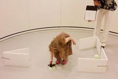 Realizando un experimento. | Moira Dillon