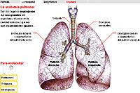 Cancer de pulmon, info para todos