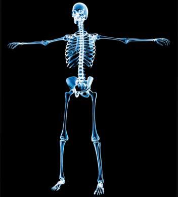 El interior del cuerpo humano