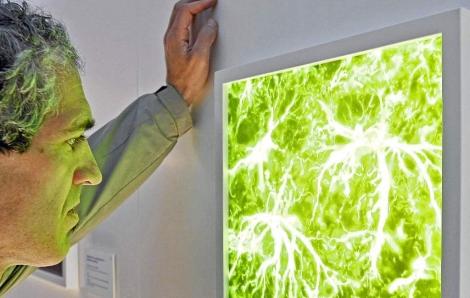 Un hombre contempla una obra sobre las neuronas. | Carrascal | El Mundo