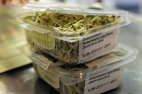 Una técnico de laboratorio realiza pruebas a semillas germinadas. |  EFE