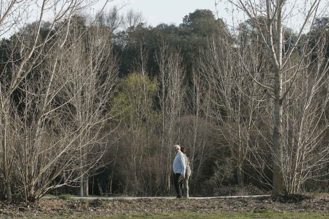 Un paseo entre árboles.| Diego Sinova