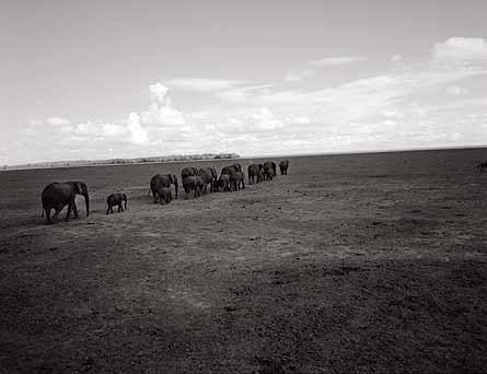 Impacto por Cambio climatico Kenya_64-48a