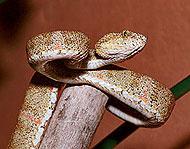 la serpiente mas grande del mund